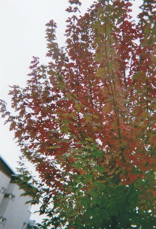 Kostenloses Stock Foto zu 35mm film, 35mm-film, autumn, fall