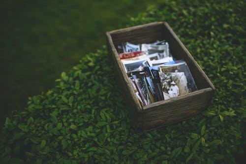 ağaç, ahşap, anılar, bağbozumu içeren Ücretsiz stok fotoğraf