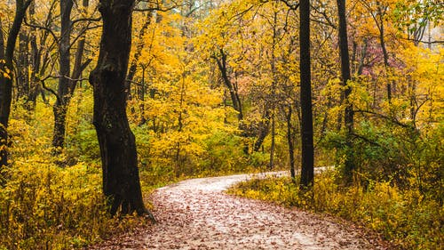 Fotos de stock gratuitas de árbol, arce, caer