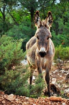 22 drolly donkey photos pexels free stock photos