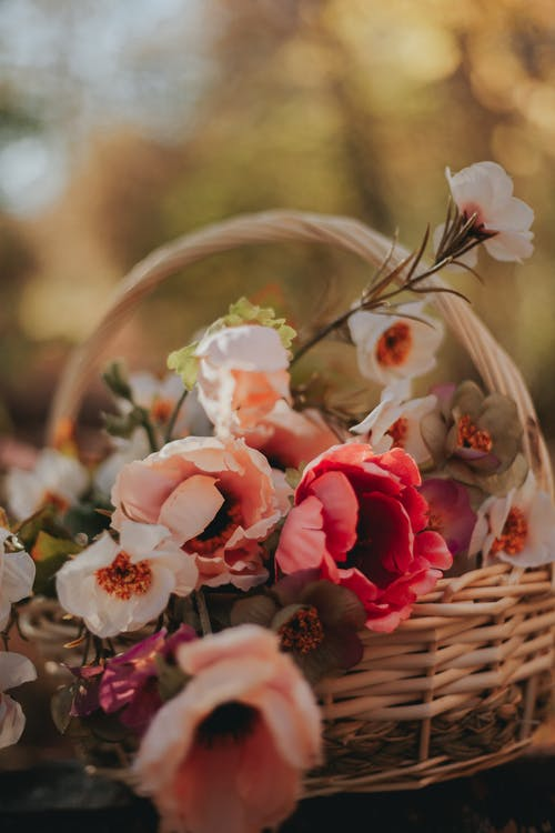 Wicker basket with tender fragrant flowers placed on blurred nature background in daylight