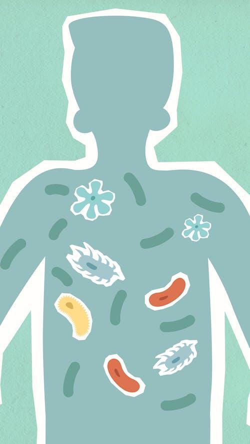 Illustration Of Internal Human Body