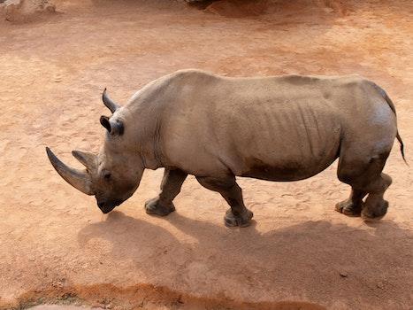 Free stock photo of animal, big, zoo, outdoors