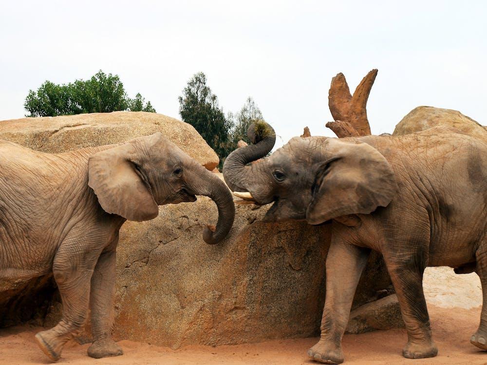 Two Grey Elephants Beside Rock