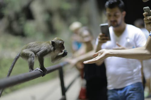 Free stock photo of eating, malaysia, monkey