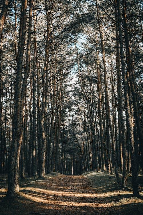 公園, 冬季, 原本, 太陽 的 免費圖庫相片