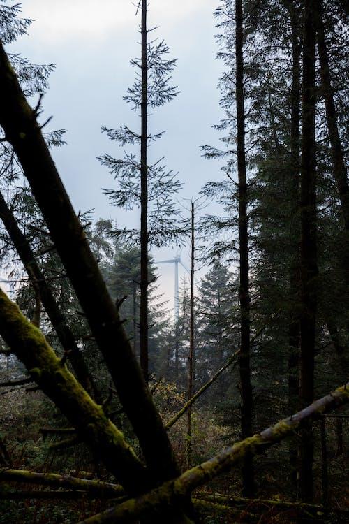 Free stock photo of energy, forest, ireland