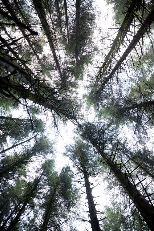 Free stock photo of forest, ground up, look up