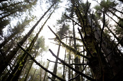 Free stock photo of branch, forest, moss