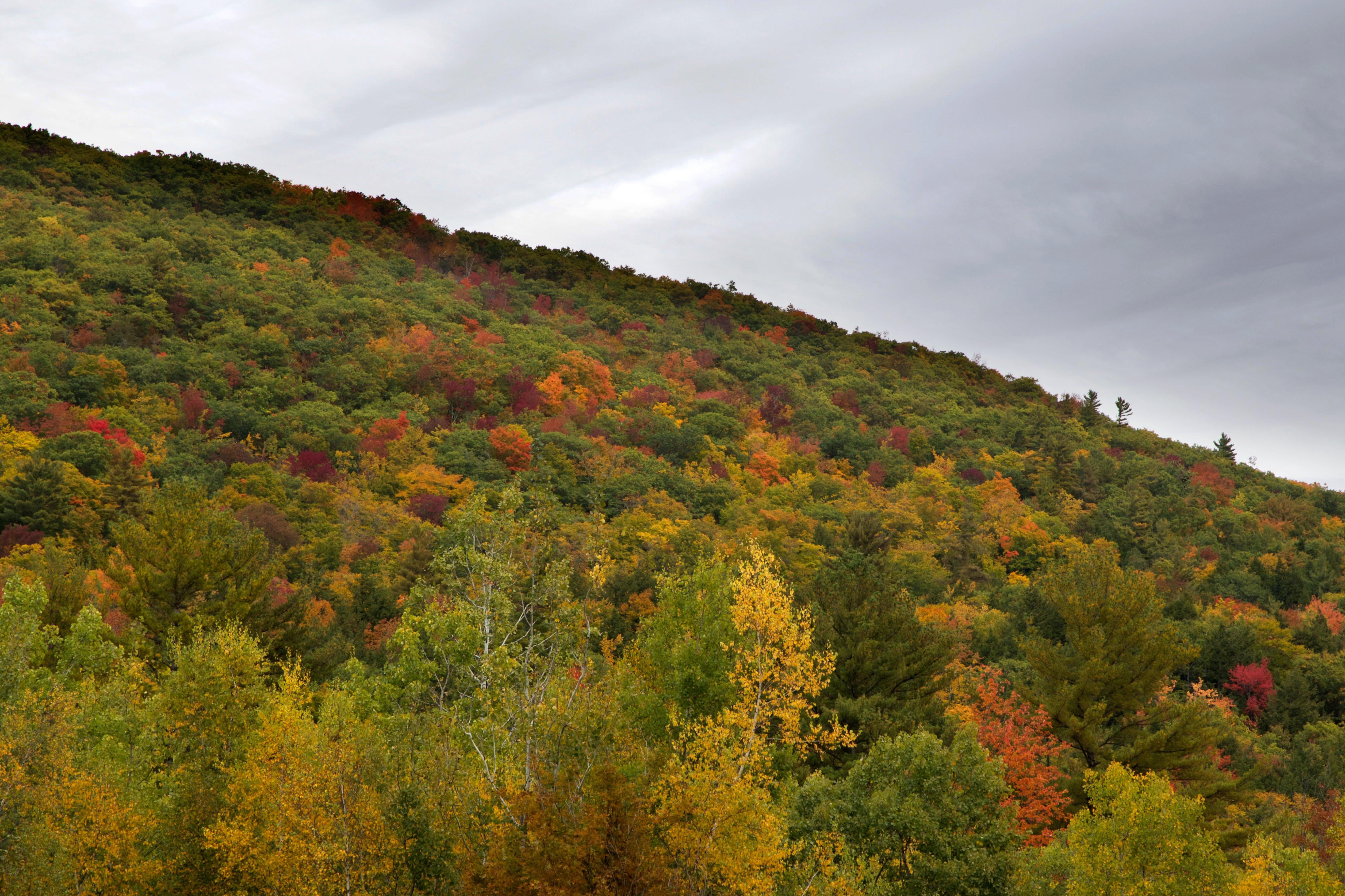 ağaçlar, bitki örtüsü, dağ, doğa içeren Ücretsiz stok fotoğraf