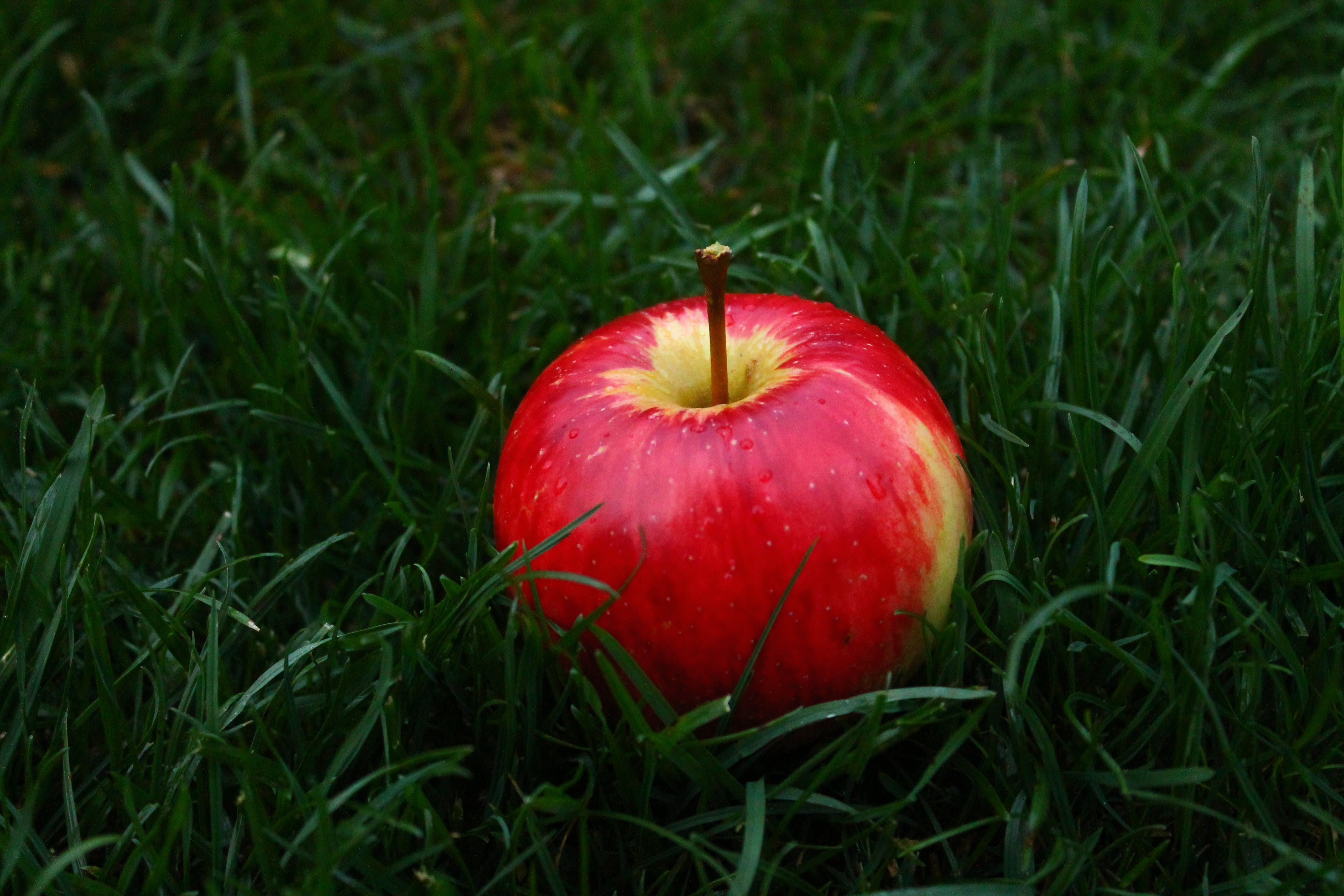 Red Apple Fruit on Grass