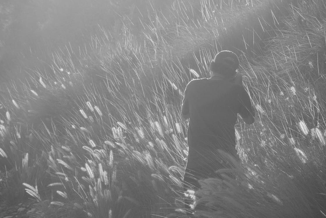 blåsigt, fält, fotograf
