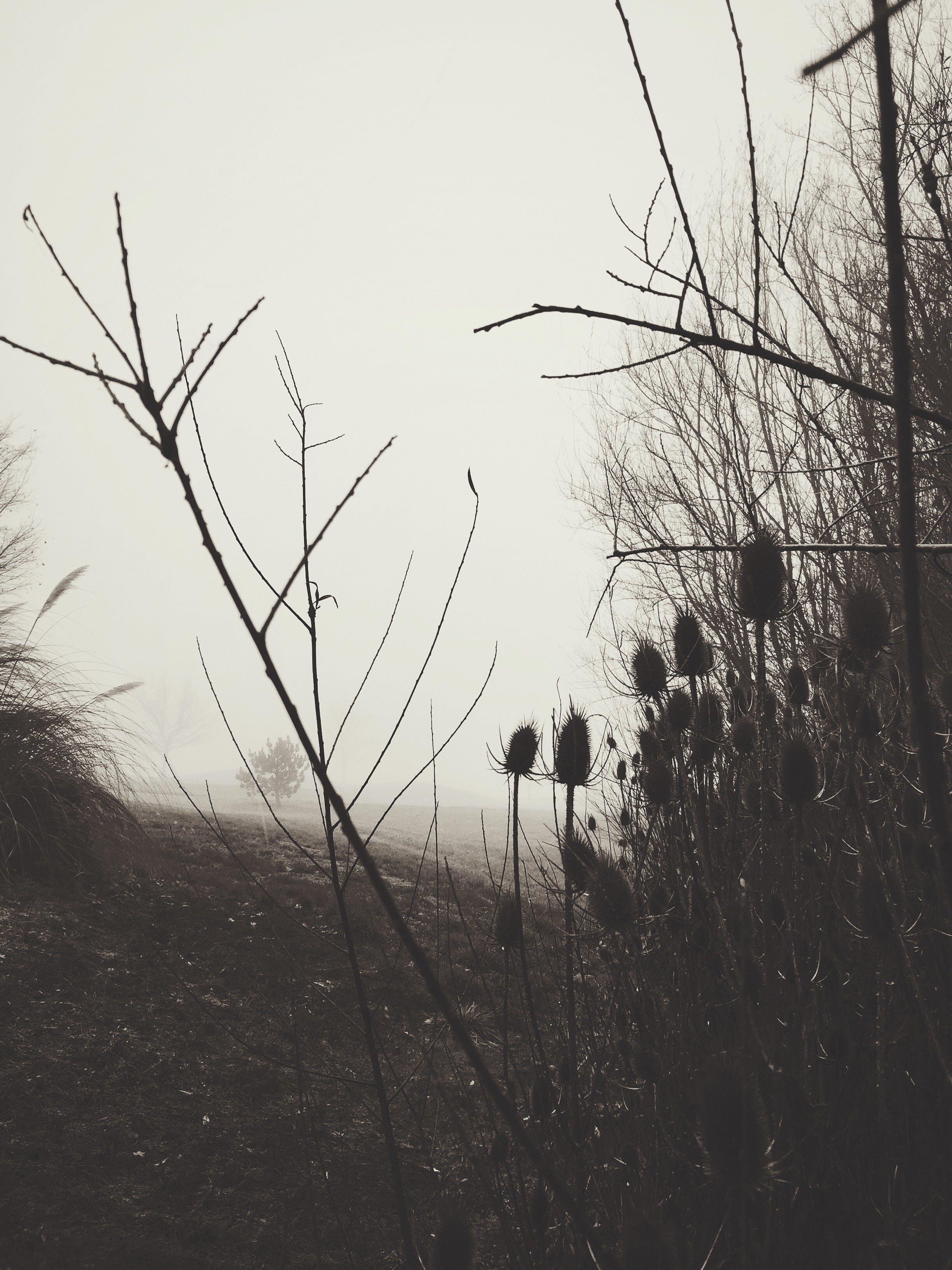 คลังภาพถ่ายฟรี ของ ทางเดิน, ธรรมชาติ, ปาร์ค, ภูมิทัศน์