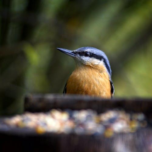 Close Up Shot of a Bird