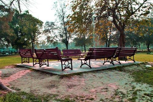 Základová fotografie zdarma na téma lavičky, park, zahrada