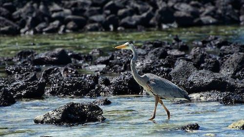 動物, 岸邊, 水, 水鳥 的 免費圖庫相片