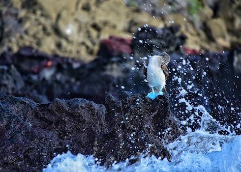 Free stock photo of sea, nature, bird, water