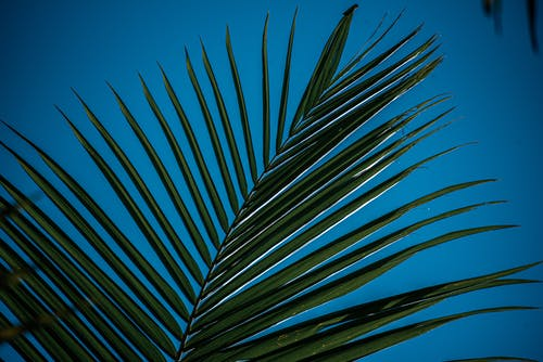 Green palm branch with against blue sky