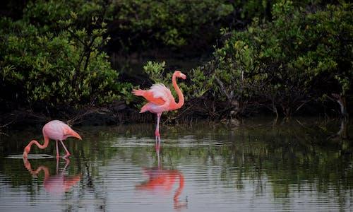 คลังภาพถ่ายฟรี ของ ขน, ขนนก, ที่ลุ่มน้ำขัง, น้ำ