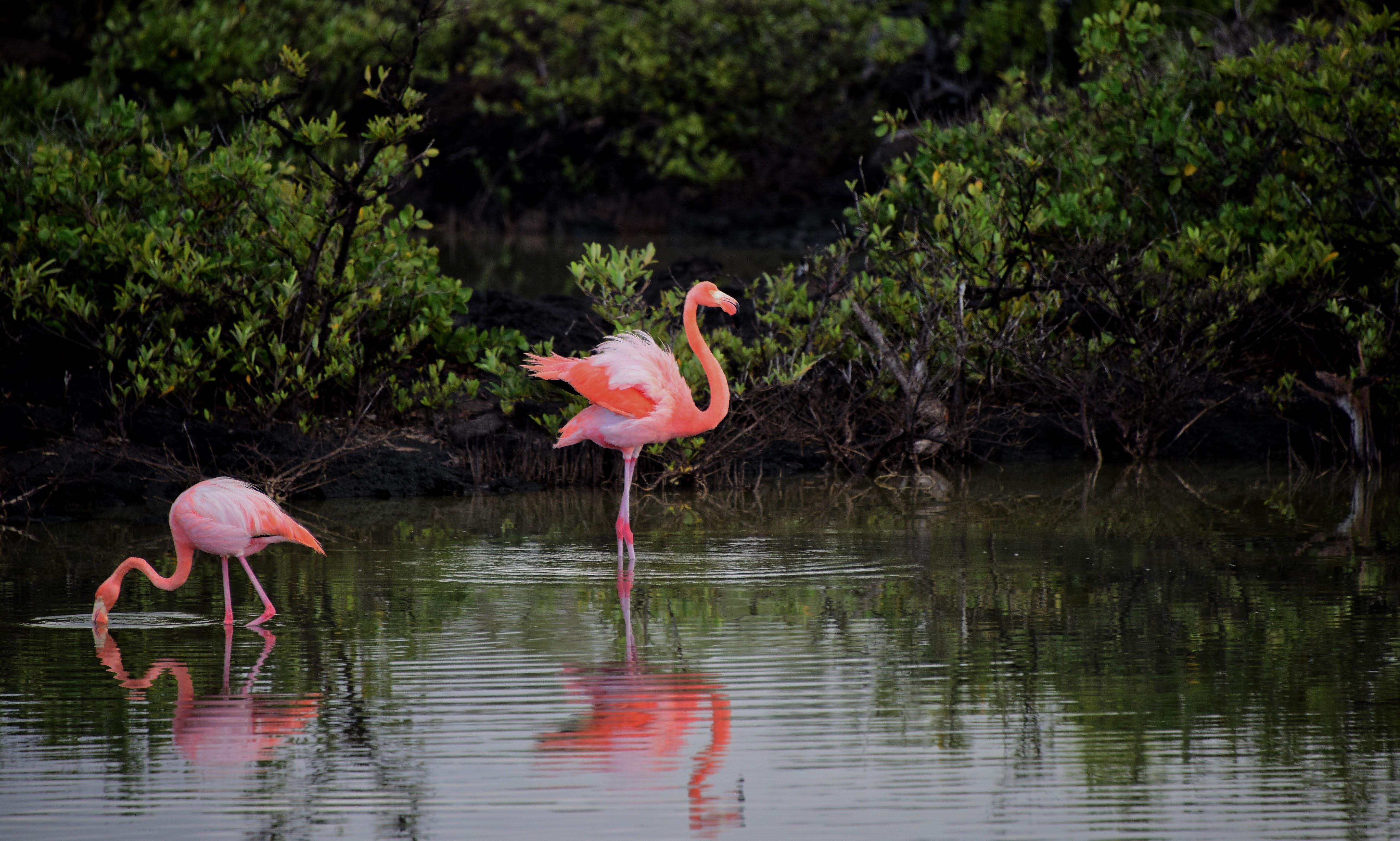 pink flamingos  u00b7 free stock photo