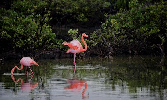 Free stock photo of water, animal, lake, birds