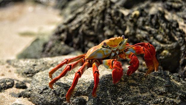 Free stock photo of beach, sand, animal, crab