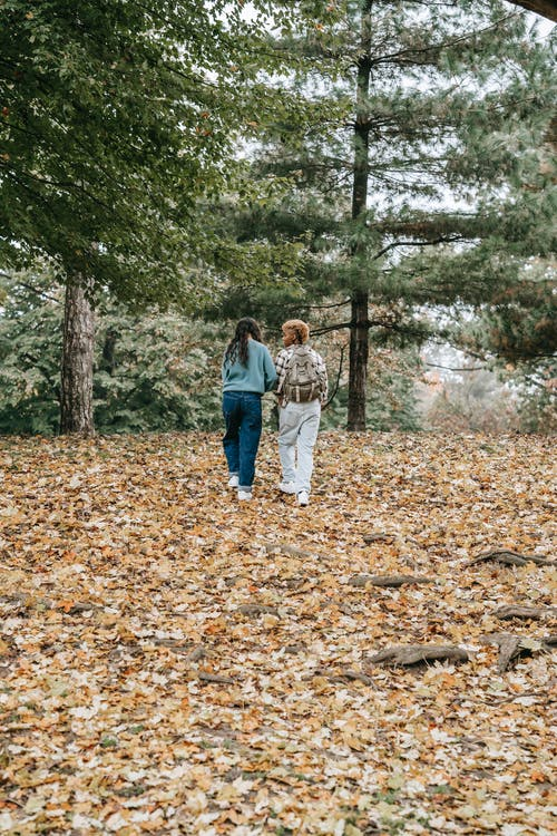 Back view of distant unrecognizable homosexual women walking in park with fallen leaves and trees during romantic date in nature