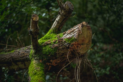 Free stock photo of autumn mood forest, moss, tree log