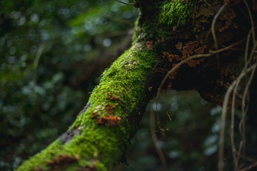 Free stock photo of autumn mood forest, moss