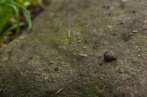 Free stock photo of snail, wallpaper