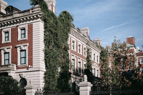 Imagine de stoc gratuită din acasă, apartament, arbore