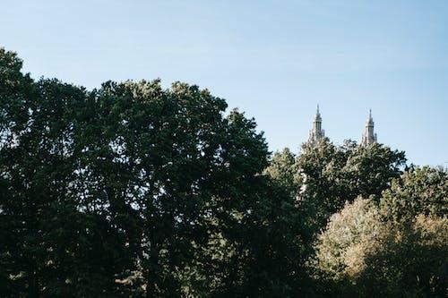 Fotos de stock gratuitas de al aire libre, antiguo, árbol, arbusto