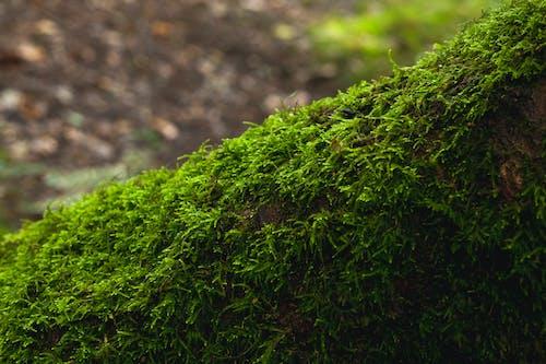 Free stock photo of moss, tree log