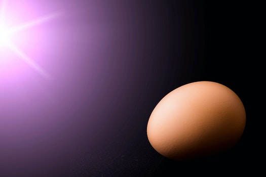 Free stock photo of egg, chicken, black, flare