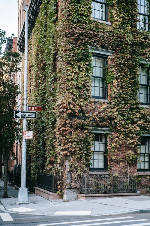 Overgrown residential building on street in city