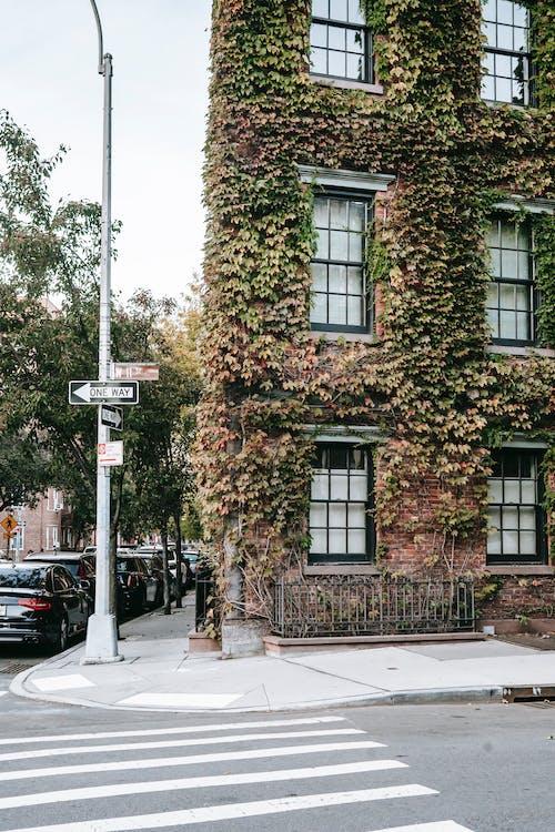 Casa Invasa Sulla Strada In Città