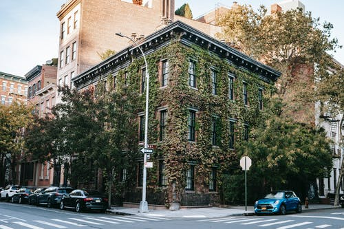 Exterior of old building covered with green plants