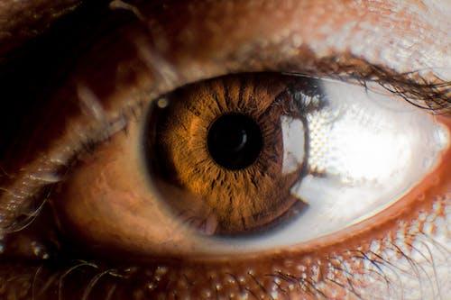 棕色眼睛 的 免费素材照片