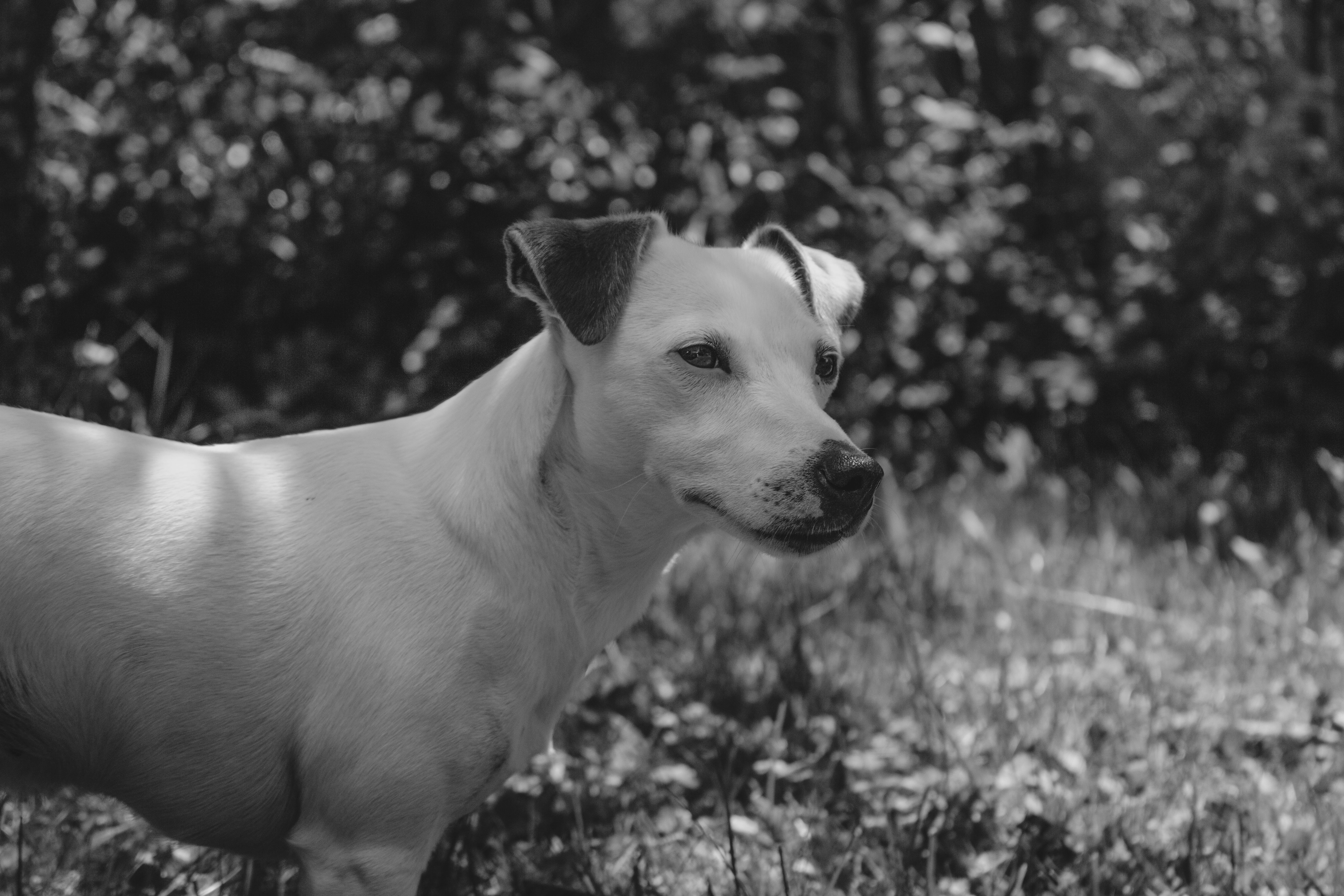 Free stock photo of animal, black and white, bokeh, detail
