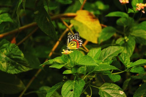 Butterfly on Green Leaf