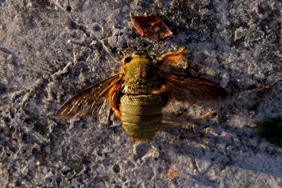 Free stock photo of bee, dead, fallen