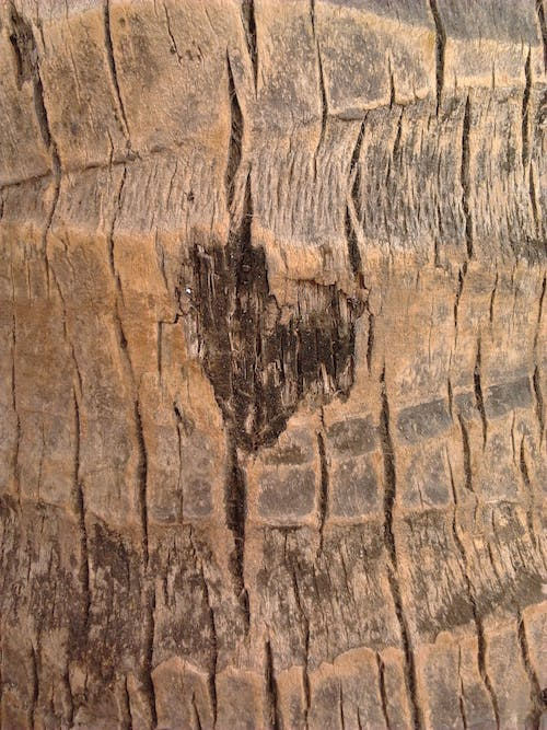 Free stock photo of heart wood