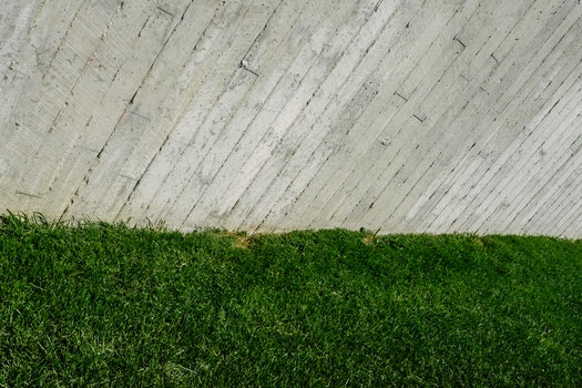 Free stock photo of pattern, texture, abstract, grass