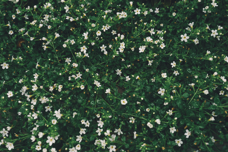 botanical, flower, flowers