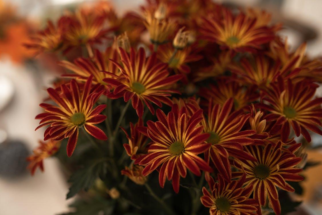 Orange and Yellow Flowers in Tilt Shift Lens