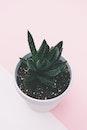 plant, pot, leaves