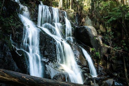 Foto profissional grátis de água, ao ar livre, árvores