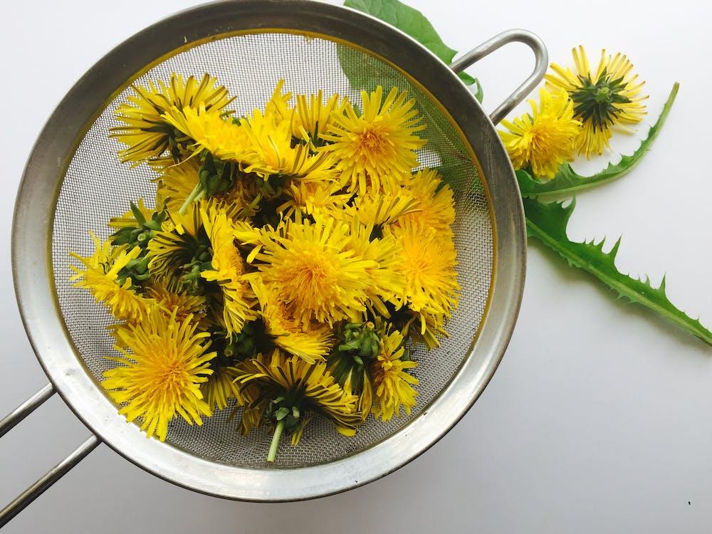 Free stock photo of dandelion, flower, forage