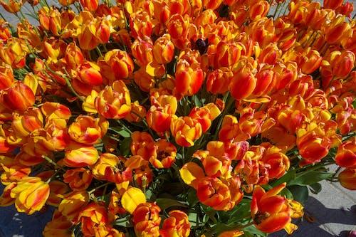 Foto d'estoc gratuïta de colors brillants, flor de primavera, flor groga, flors boniques