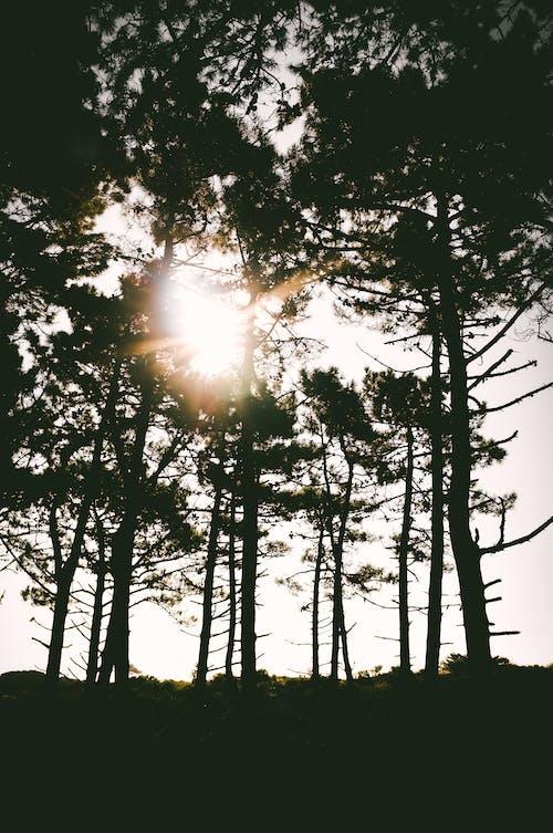 Foto d'estoc gratuïta de alba, arbres